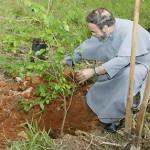 7 mil árvores plantadas por ocasião da Visita do Papa