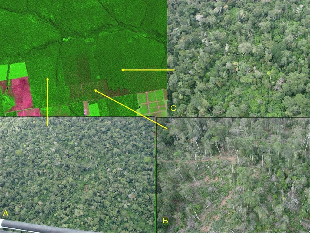 A figura ilustra os padrões de degradação por atividade madeireira observados nas imagens realçadas / www.obt.inpe.br/deter