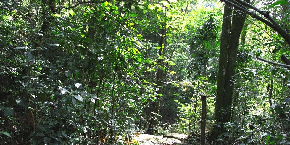 fazenda, que abrigará os animais tem 1,1 mil hectares e foi adquirida por meio de doações / Foto: Divulgação Santuário de Elefantes Brasil