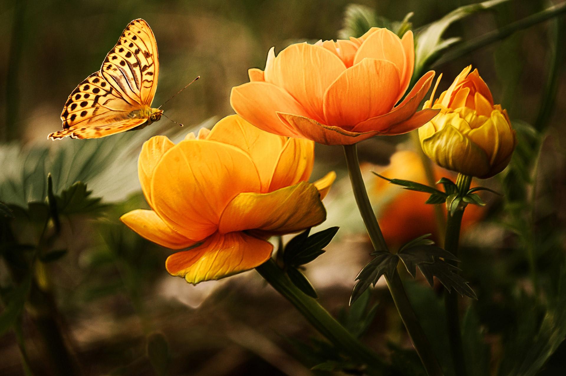 Primavera começa nesta quinta-feira, 22, e termina no dia 21 de dezembro / Foto: Domínio Público