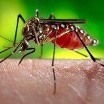 dengue oswaldo cruz