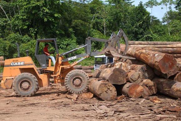 desmatamento - agencia brasil