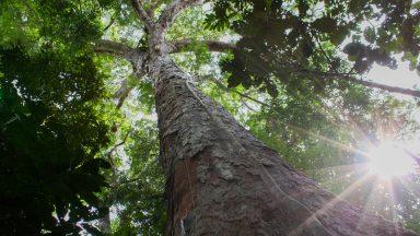 Sínodo para a Amazônia: Vaticano apresenta documento de trabalho
