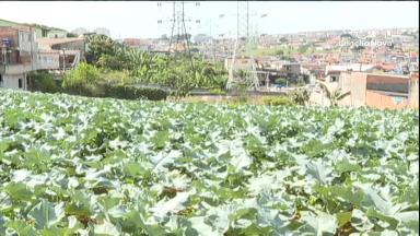 ONG utiliza espaços públicos em SP para plantar hortas comunitárias