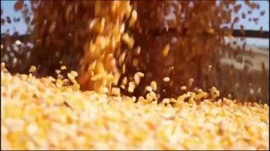 Governo federal suspende o imposto de importação do milho e da soja