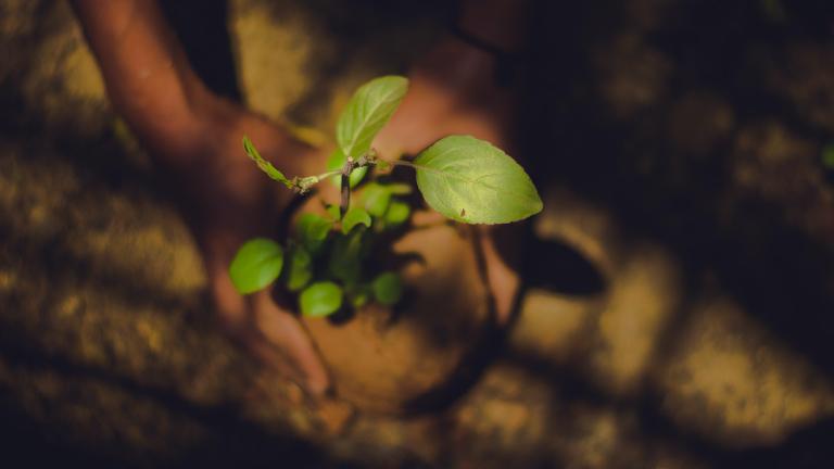 plantação_natureza-Kasturi-Laxmi-Mohit-on-Unsplash.jpg