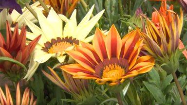 Primavera: chegada da estação das flores também trará chuva