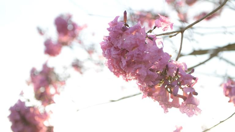 primavera-flores-wesley-almeida.jpg