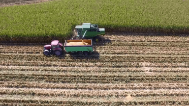 Safra agrícola eleva o PIB do agronegócio em quase 10%