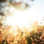 Paraíso, sinal da familiaridade com Deus
