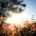 Viver segundo a Divina Providência aproxima-nos de Deus