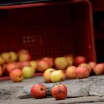 11 dicas para evitar o desperdício de alimentos - 940x500