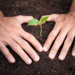 Os acontecimentos do mundo nos faz querer cultivar a paz-artigo