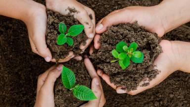 Você sabe o que é ecologia integral?