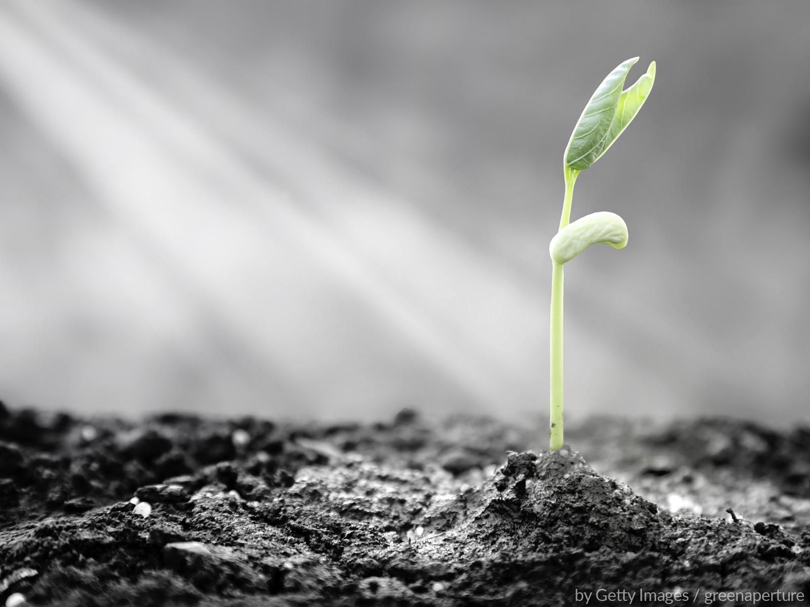 Reconstruir a esperança