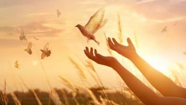 O que a Igreja entende por paz?