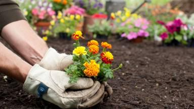 O que é que se encontra no início: o jardim ou o jardineiro?