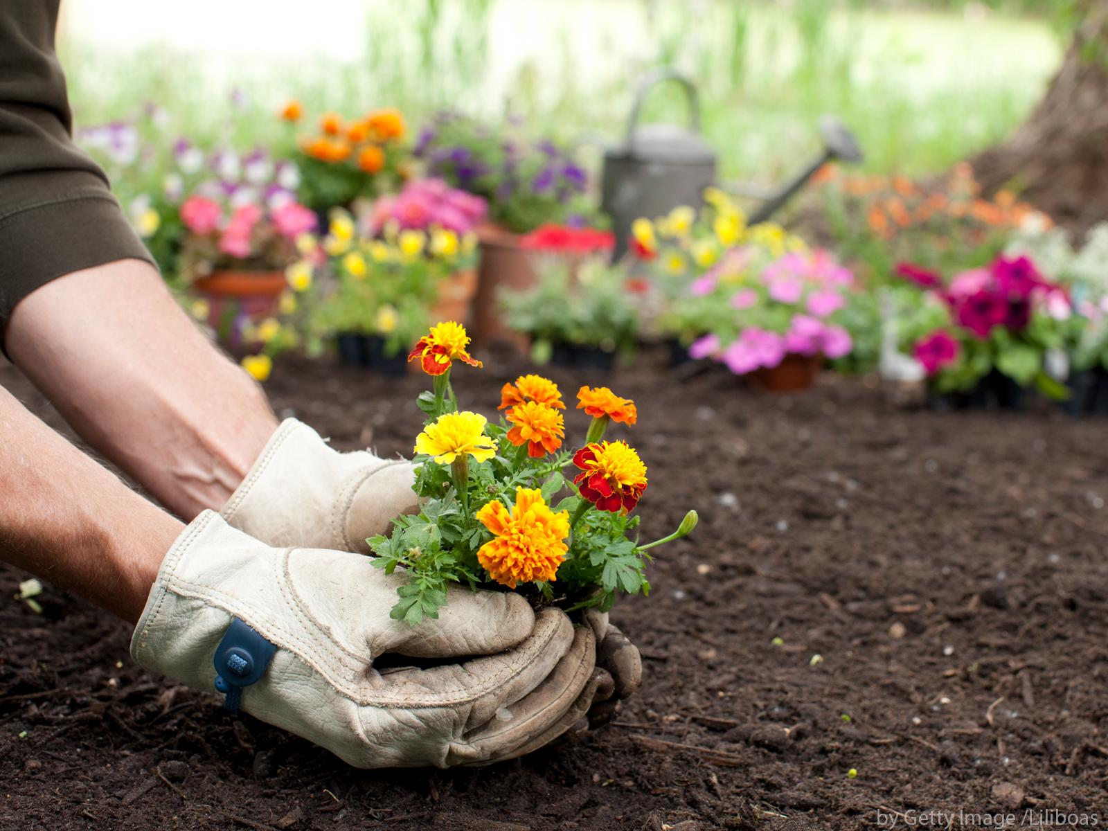 O que é que se encontra no início o jardim ou o jardineiro