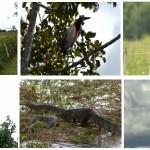 Conheça as belezas do Pantanal