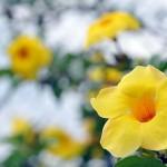 Primavera - o tempo das surpresas de Deus