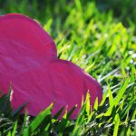 Pregações que nos levam ao amor verdadeiro