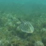 Conheça as belezas naturais de Abrolhos (BA)