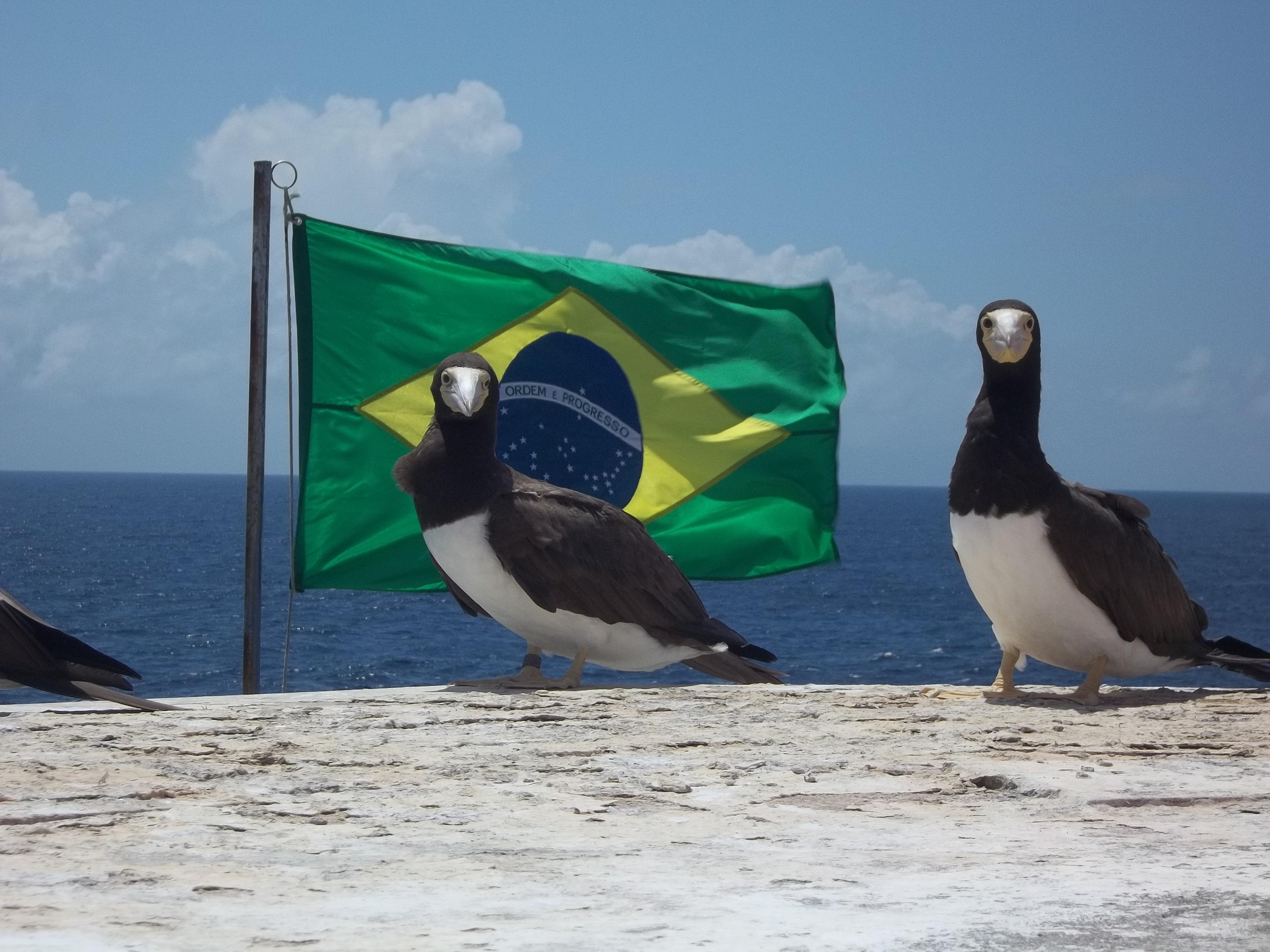 Arquipélago de São Pedro e São Paulo (8)