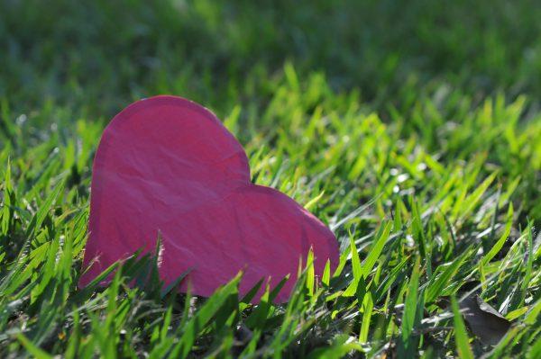conhecer o coração