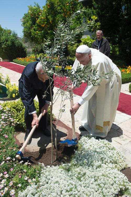 Francisco e Shimon Peres plantam uma oliveira /